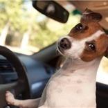 Pet Safety Memorial Day   Pedegru   Animals Make Life Better   Scoop.it