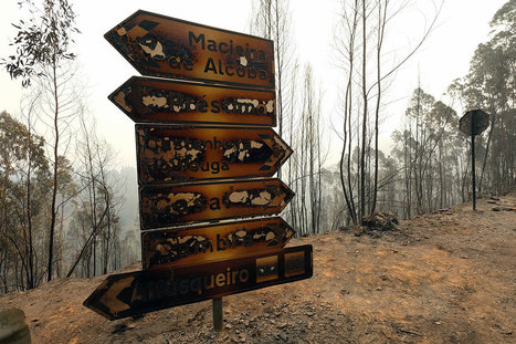 Portugal: Wildfires rage across Madeira Islands | Lisbon Lifestyle | Scoop.it