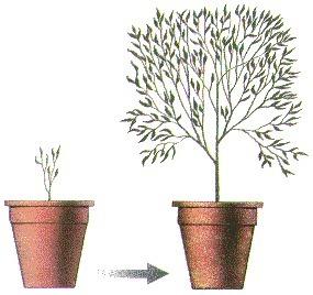 Fisiología Vegetal | Botánica | Scoop.it