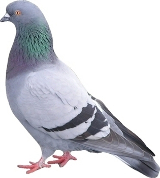 Pigeon, le nouvel algorithme de Google Local - Actualité Abondance | Google - le monde de Google | Scoop.it