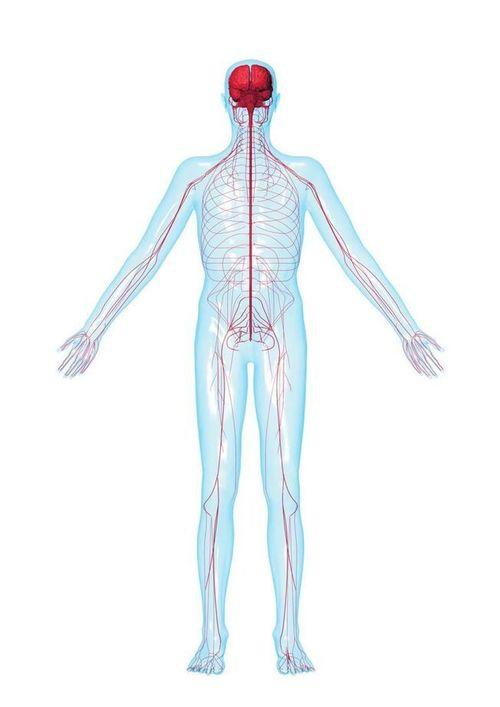 neuropatia e stress