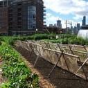 Jardiniers du ciel, face au défi alimentaire   Nature et urbanisme   Scoop.it