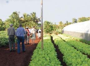 Cuban Cooperatives Advance, Diversify   Cooperative Grocer   Workercoops   Scoop.it