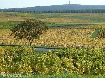 Une application smartphone pour découvrir les vignobles du Centre-Loire | Vin 2.0 | Scoop.it