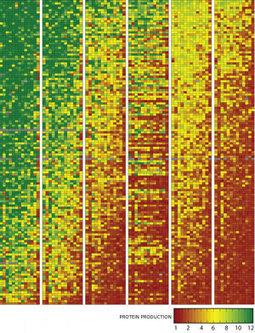 A hidden genetic code for better designer genes | Amazing Science | Scoop.it