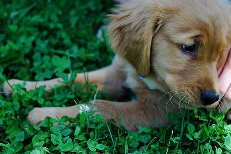 Perceiving cuteness enhances behavioral carefulness | Cognitive Science | Scoop.it