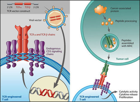 Allogeneic tumor vaccine' in Cancer Immunotherapy Review and