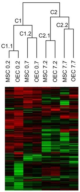 Gene Expression Changes in the Injured Spinal Cord Following Transplantation of Mesenchymal Stem Cells or Olfactory Ensheathing Cells   Stem Cells & Tissue Engineering   Scoop.it
