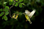 1x.com - Love by CK NG   Places of Peace   Scoop.it