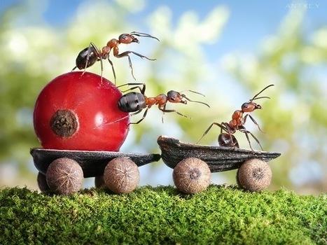 Inspirations 2012 » Résolution collective de problèmes par la robotique inspirée du vivant | Une nouvelle civilisation de Robots | Scoop.it