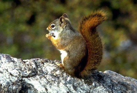 Who's winning the cyber war? The squirrels, of course | Cyber Defence | Scoop.it