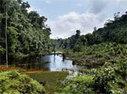 Sites naturels de compensation de la biodiversité : la consultation est ouverte   Veille en Environnement - Energie   Scoop.it