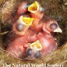 "Blog from ""The Natural World Society"""