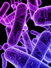 Study suggests serotonin levels are regulated by gut bacteria | Philosophy and Science of Mind and Brain | Scoop.it