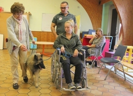 Des diplômes pour ces chiens qui redonnent le sourire | CaniCatNews-actualité | Scoop.it