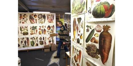 Semences Potagères moyen fin Variété chou parus Jardin Paquet illustré UK