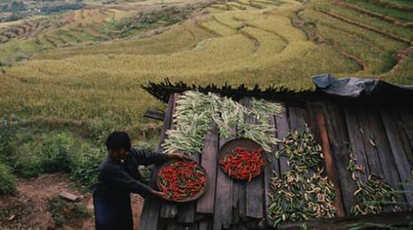 Bután, el primer país del mundo en permitir sólo la agricultura ecológica | Puntos de referencia | Scoop.it
