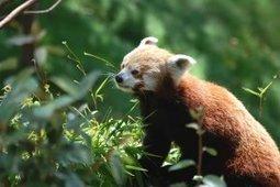 Optimiser Firefox pour les petites configurations - Libre et ouvert   Astuces Linux   Scoop.it