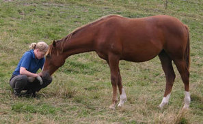 Females better under stress than males, animal study finds - News - Horsetalk.co.nz | Equestrian Vacations | Scoop.it