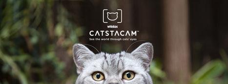 Catstacam, et vous savez où vagabonde votre chat ! - Eboow | #Réseaux,#Data,#Visual data,#Open Data, #Sociabilités, #Savoirs, #Travail, #Utopies,  #Social Change,#Innovations, #commons, #Fab Lab, #Crowdsourcing, #Transhumanisme,#Robotisation,#Objets connectés,#E Santé | Scoop.it