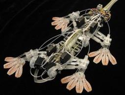Biomimetics: It Looks Like a Bird, it Acts Like a Bird, But it's Not a Bird   Flossing & Health   Scoop.it