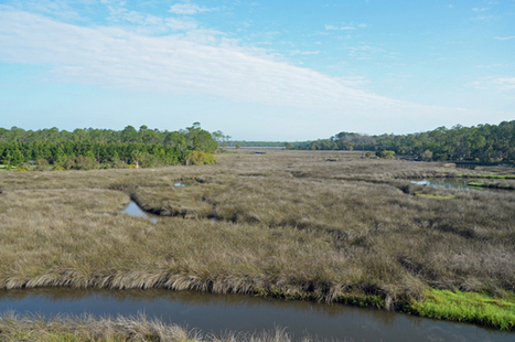 Flagler Favors Getting Into Cottage Business in County Parks, Starting at ... - FlaglerLive.com | Villa and Holiday Rentals | Scoop.it
