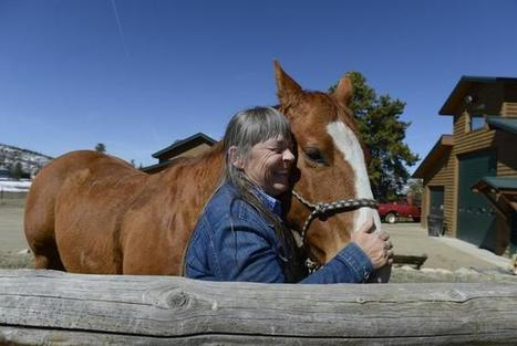 Colorado researchers use horse sense to innovate joint therapies   The Jurga Report: Horse Health, Welfare, and Care   Scoop.it