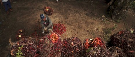 Palm Oil: Global brands profiting from child and forced labour | Sustainable Procurement News | Scoop.it