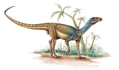Pisanosaurus mertii, no era un dinosaurio ornit...