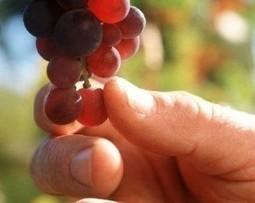 Di padre in figlio: come cambiano le imprese italiane del vino ... | Family Business | Scoop.it