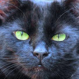 Dead Cats - Social Media and Marketing by Bogdan Fiedur | Advertising & Media | Scoop.it