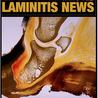 Laminitis News