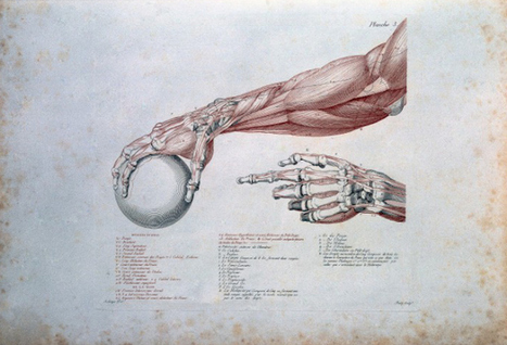 Grotesque and Gorgeous: 100,000 Art and Medicine Images Released for Open Use | H.A.Z.L.O.R.E.A.L web 3.0 | Scoop.it