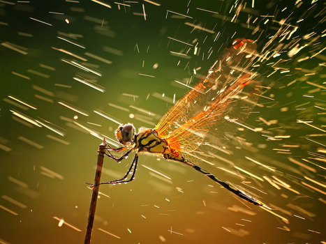 National Geographic Photography Contest Winners: 2011 - Simplemente ESPECTACULAR 1 | I didn't know it was impossible.. and I did it :-) - No sabia que era imposible.. y lo hice :-) | Scoop.it