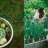 Urban Food Production