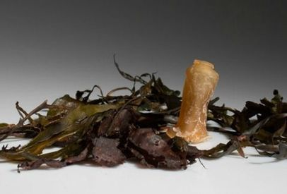 La botella hecha con algas que reduciría la contaminación | Agroindustria Sostenible | Scoop.it