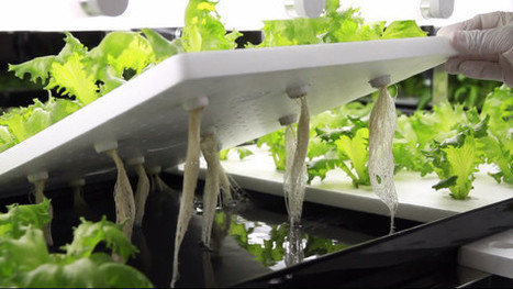 Better Than Organic: Why Lab-Grown Produce Is the Future | Vegetable Gardening Resources | Scoop.it