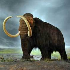 Fact or Fiction?: Mammoths Can Be Brought Back from Extinction | Amazing Science | Scoop.it