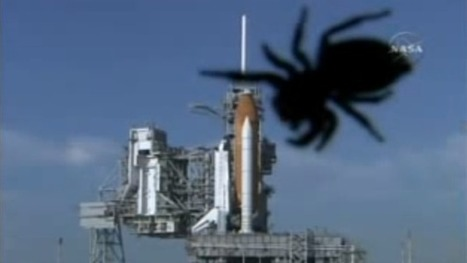 Giant spider attack delayed NASA's mission in 2007 | Technology | Scoop.it