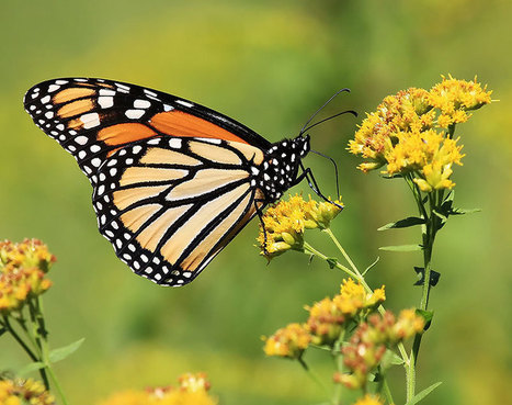 8 Fall-Blooming Flowers Friendly to Bees, Birds, and Butterflies - Modern Farmer   Sustainability: Permaculture, Organic Gardening & Farming, Homesteading, Tools & Implements   Scoop.it