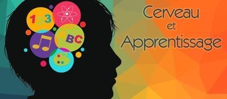 Un site sur le cerveau dédié aux enseignants | Le site de la Fondation La main à la pâte | TICE | Scoop.it