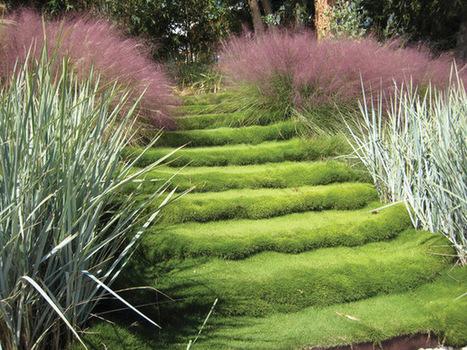 plantes pour tenir la terre et fixer les talus. Black Bedroom Furniture Sets. Home Design Ideas