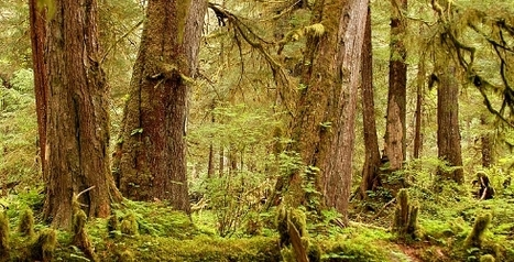 Elders of the Forests Disappearing Worldwide -Irreplaceable habitat for many animals. | Biodiversity IS Life  – #Conservation #Ecosystems #Wildlife #Rivers #Forests #Environment | Scoop.it