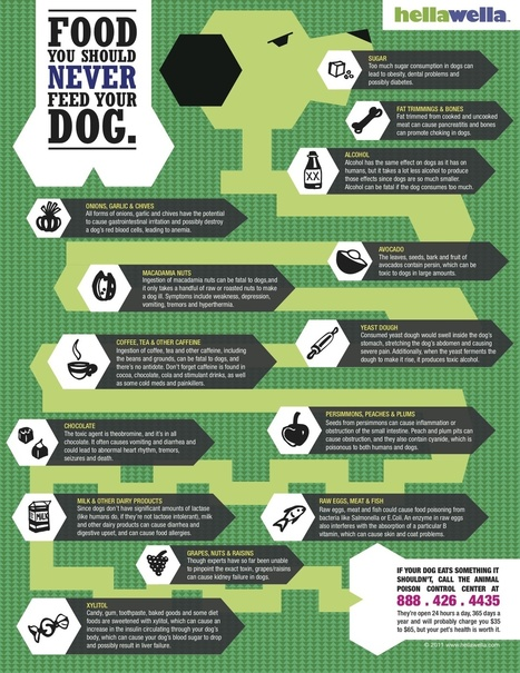 Food you should never feed your dog - INFOGRAPHIC | Innovative Marketing and Crowdfunding | Scoop.it