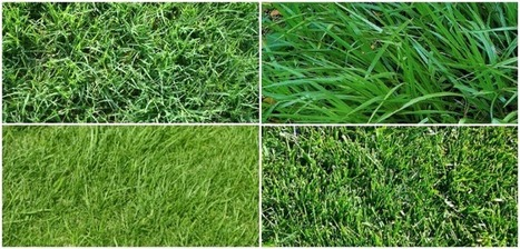 How to Choose the Right Lawn Grasses | Gardening | Scoop.it