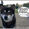 Agility in Japan