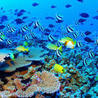 Guide to Great Barrier Reef Day Trips