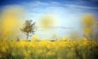 Biofuel fails EU sustainability test, German researchers claim | Sustainability in the Philadelphia Area | Scoop.it