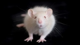Empathy and Helping Behavior Found Further Back in Evolution   Empathy and Animals   Scoop.it