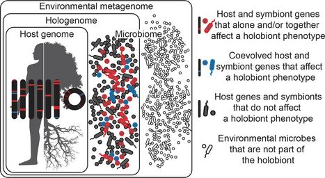 Getting the Hologenome Concept Right: an Eco-Evolutionary Framework for Hosts and Their Microbiomes | Plant Genetics, NGS and Bioinformatics | Scoop.it